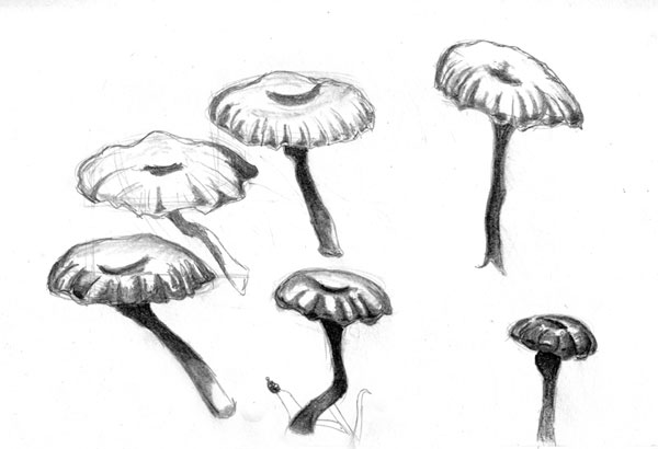 Mushrooms Sketch