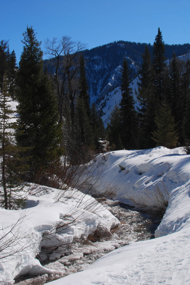 Steep embankments on Wolf Creek