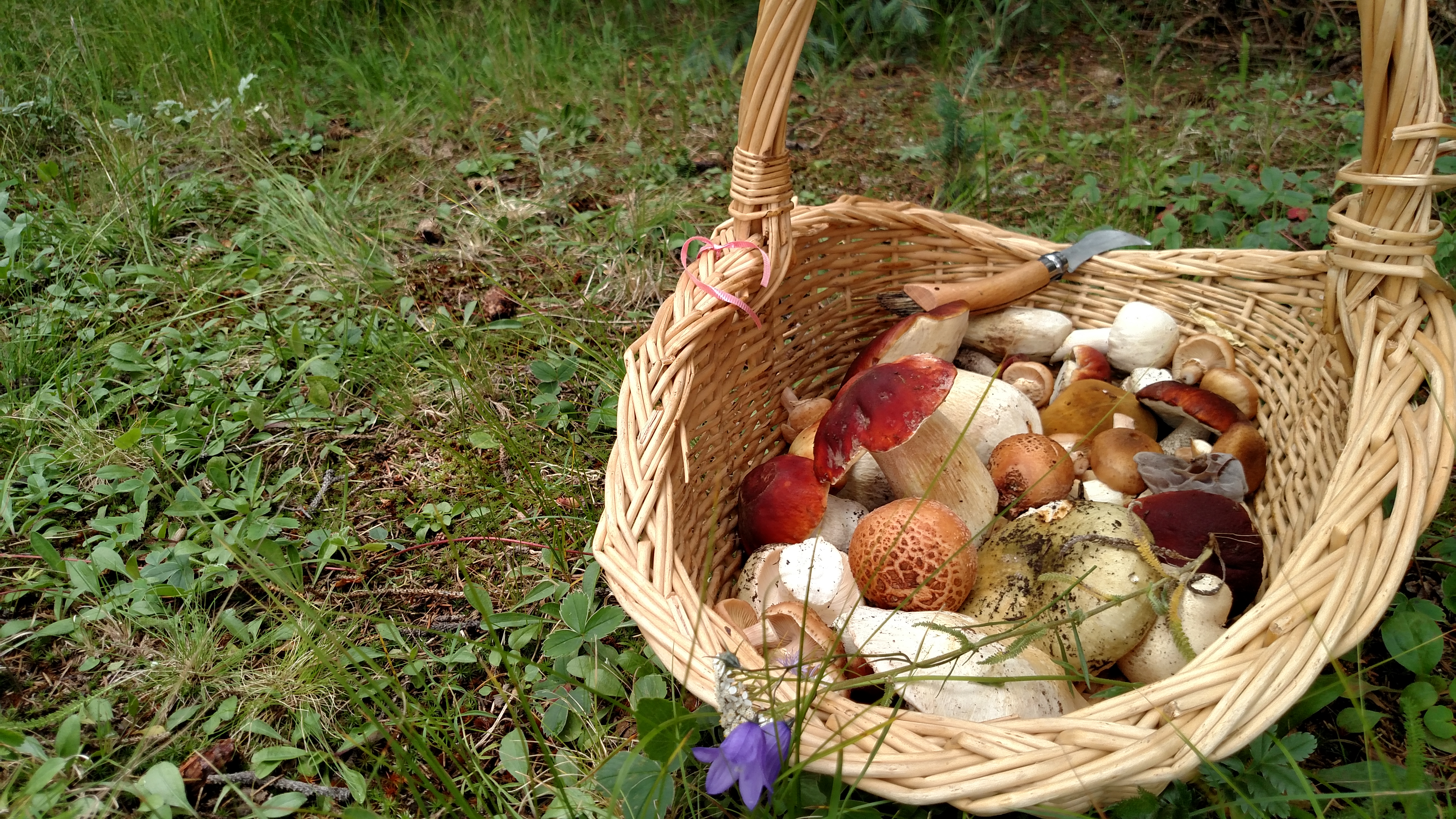 Basket of wild foraged mushrooms